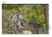 Northern Goshawk Brings Prey To Nest Carry-all Pouch