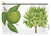 Osage Orange Tree Carry-all Pouch