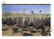 Ostrich Females South Africa Carry-all Pouch