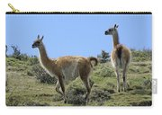 Patagonian Guanacos Carry-all Pouch
