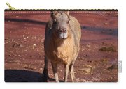 Patagonian Mara Carry-all Pouch