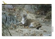 Bobcat Carry-all Pouch by Mae Wertz
