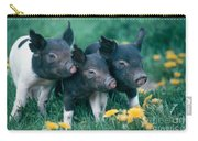 Piglets Carry-all Pouch by Alan and Sandy Carey