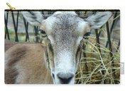 Portrait Of Mouflon Ewe Carry-all Pouch