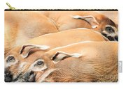 Red River Hogs Potamochoerus Porcus Carry-all Pouch