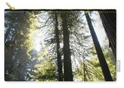 Redwoods IIII Carry-all Pouch