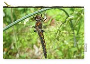 Resting Brown Dragonfly Carry-all Pouch