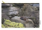Resting Seal Carry-all Pouch
