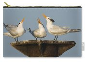 Royal Tern Trio Displaying Dominican Carry-all Pouch