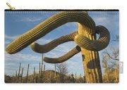 Saguaro Cacti Saguaro Np Arizona Carry-all Pouch