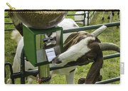 Self Serve Goat Carry-all Pouch