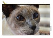 Siamese Cat Peers Into Unknown Carry-all Pouch