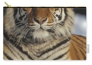 Siberian Tiger Portrait In Snow China Carry-all Pouch