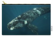 Southern Right Whale Calf Valdes Carry-all Pouch