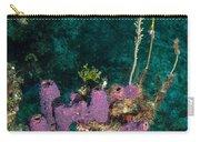 Sponge Condo Carry-all Pouch