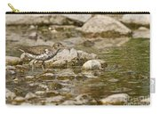 Spotted Sandpiper Pictures 36 Carry-all Pouch
