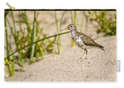 Spotted Sandpiper Pictures 45 Carry-all Pouch