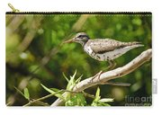 Spotted Sandpiper Pictures 48 Carry-all Pouch
