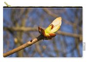 Spring Bud Carry-all Pouch