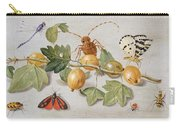 Still Life Of Branch Of Gooseberries Carry-all Pouch by Jan Van Kessel