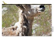Sunbathing Mountain Sheep Carry-all Pouch