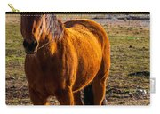 Sunset Bay Horse Heber Valley Utah Carry-all Pouch