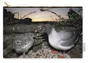 Swallow-tailed Gull And Chick In Pebble Carry-all Pouch by Tui De Roy