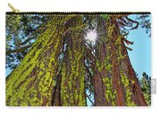 Tahoe Trees - Lake Tahoe By Diana Sainz Carry-all Pouch