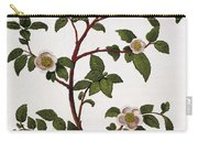 Tea Branch Of Camellia Sinensis Carry-all Pouch by Anonymous