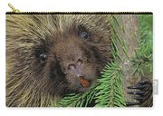 T.kitchin 14107c, Porcupine In Spruce Carry-all Pouch