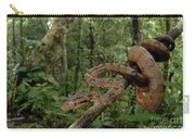 Tree Boa Carry-all Pouch by Francesco Tomasinelli