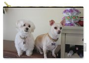 Two Little Dog Carry-all Pouch