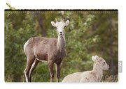 Two Young Stone Sheep Ovis Dalli Stonei Watching Carry-all Pouch