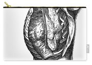 Vesalius: Thoracic Cavity Carry-all Pouch