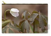 Wood Anemone Wildflower - Anemone Quinquefolia L.  Carry-all Pouch