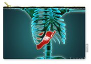 X-ray View Of Human Skeleton With Liver Carry-all Pouch by Stocktrek Images