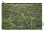 Yellow-barked Acacia Trees Carry-all Pouch