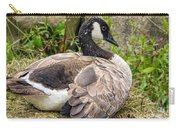 Young Canada Goose Carry-all Pouch