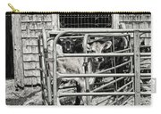 Young Cows In Pen Near Barn Maine Photograph Carry-all Pouch