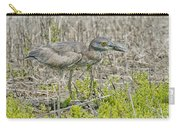 Young Yellow-crowned Night Heron Carry-all Pouch