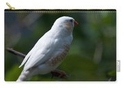 Zebra Finch Of Australia Carry-all Pouch