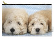 Zuchon Teddy Bear Dogs, Lying Carry-all Pouch