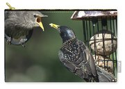 Adult Starling Feeds A Juvenile Carry-all Pouch