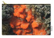 Close-up Of Live Sponge Carry-all Pouch by Ted Kinsman