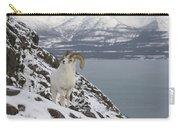 Dall Sheep Ovis Dalli Ram, Yukon Carry-all Pouch