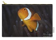 False Ocellaris Clownfish In Its Host Carry-all Pouch