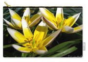 Mini Botanical Tulip Named Dasystemon Tarda Carry-all Pouch