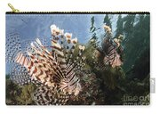 Pair Of Lionfish, Indonesia Carry-all Pouch