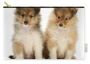 Sheltie Puppies Carry-all Pouch by Jane Burton