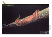 Velvet Worm Carry-all Pouch